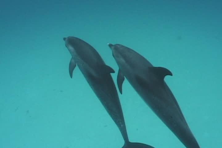dolphin - SD stock video clip