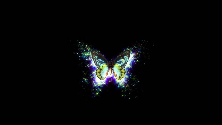 animated flying decorative butterfly on black background with shining stars and alpha channel