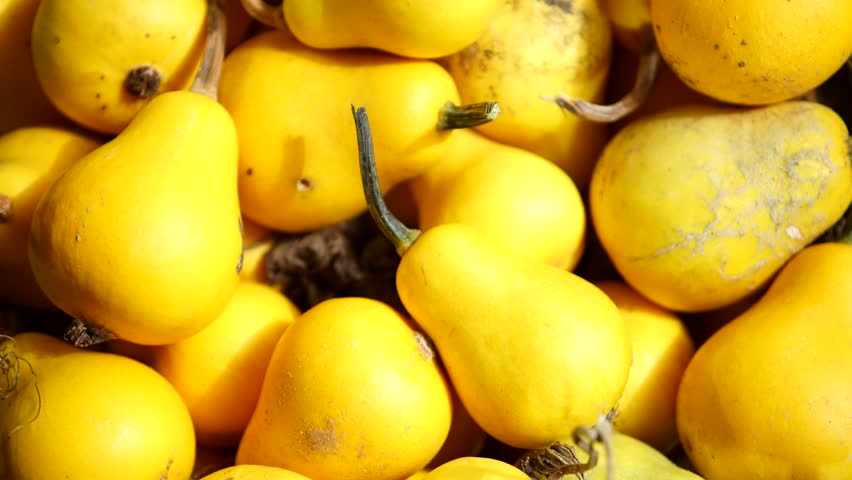 Small yellow pumpkins in a family market. close up. macro. | Shutterstock HD Video #24113821
