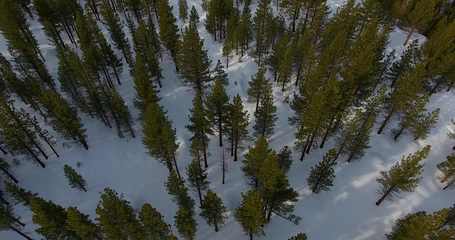 Aerial view of a great expanse of Pine trees in winter 4k 24fps  | Shutterstock HD Video #24115702