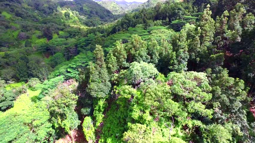 Amazing evergreen nature trees in wild forest on top of mountain, 4k aerial view | Shutterstock HD Video #24152800