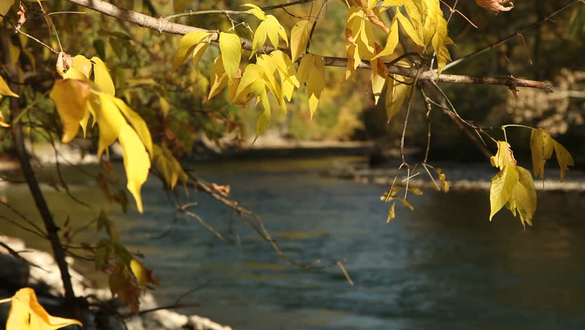 Yellow autumn foliage on the banks of the Boise River. - HD stock video clip