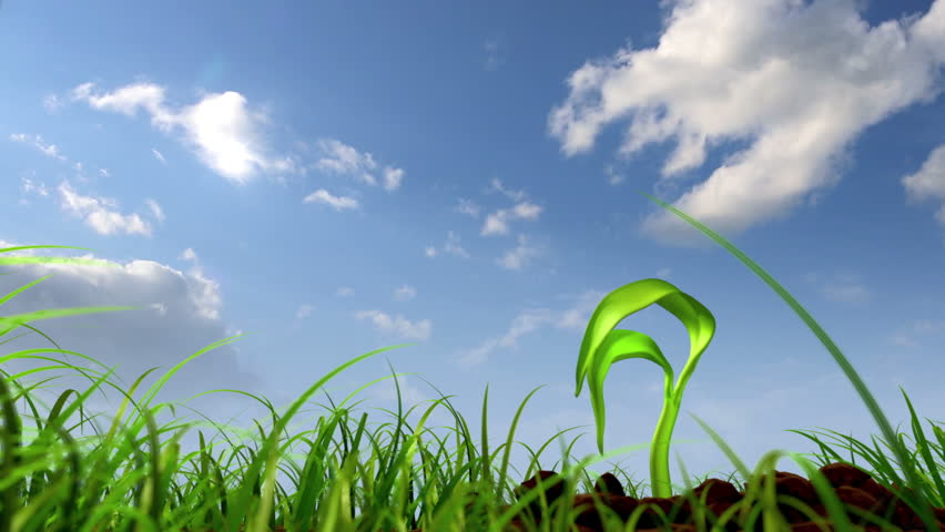 growing plant against sky background, 3d animation