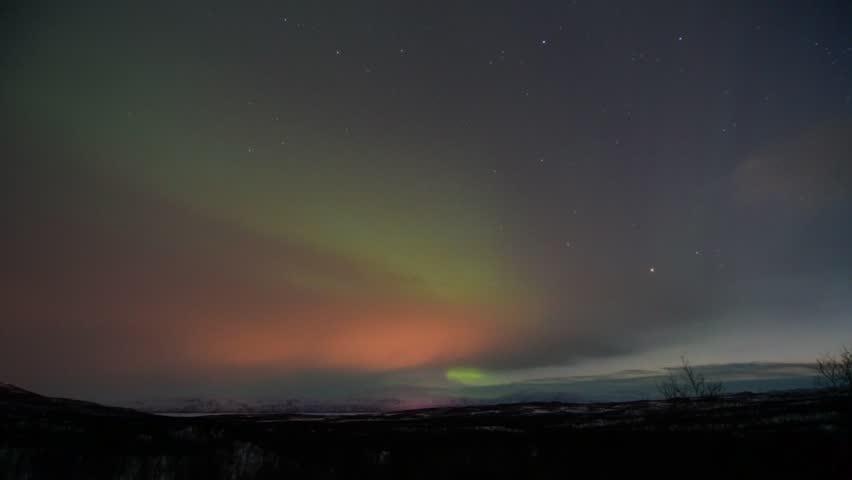 Aurora borealis in a scandinavian forest