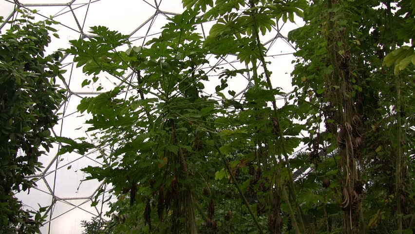 Pan across the roof of the tropical biome, Eden Project, Cornwall - HD stock footage clip