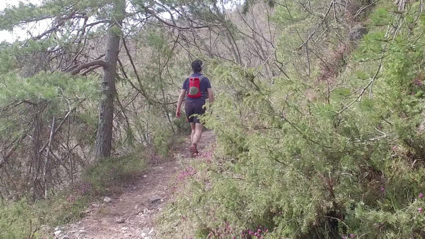 A man with sports equipment and sports clothing hiking at Mala Grmada, Polhograjski Dolomiti. Hiking with backpack on a footpath with root, through coniferous forest. SLO MO.  | Shutterstock HD Video #27174352