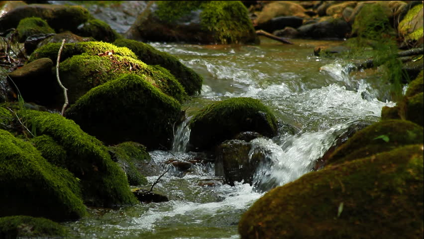 Clean fresh water of a forest stream running over mossy rocks  - HD stock footage clip