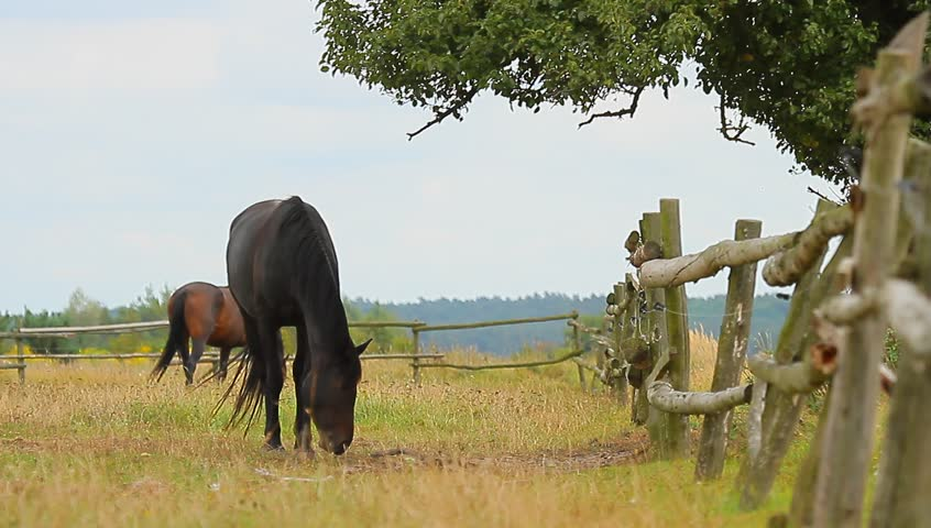 horse in a field, farm animals series