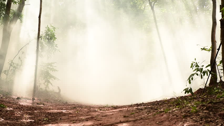 Bright light of forest in fog storm and with light ray. | Shutterstock HD Video #28554790