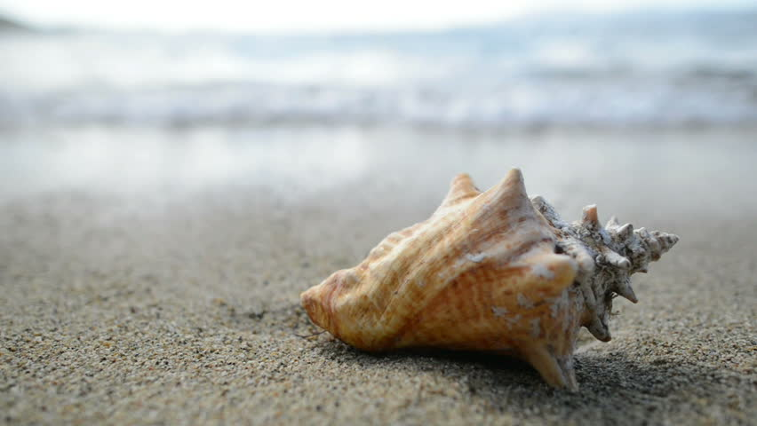 Conch shell with waves on the beach in the British Virgin Islands