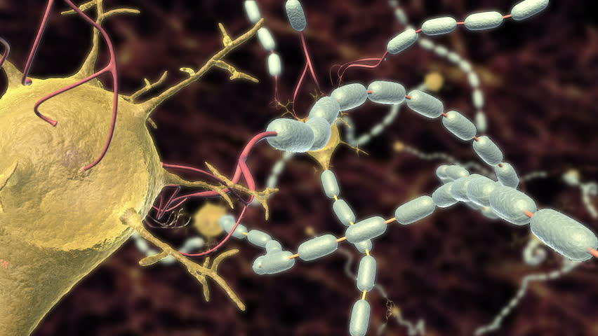 3D animation of action potential conduction through many myelinated neurons, pulse highlighted as it moves through dendrite, soma and axon. - HD stock video clip