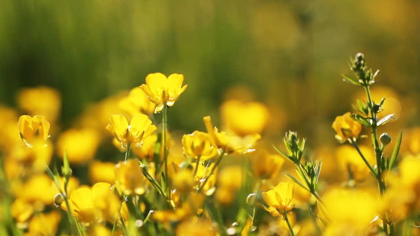 Rack Focus Shot Of Flowers In Garden Stock Footage Video 4313393 ...