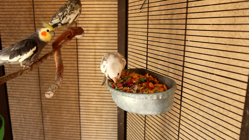 Feeding Time in the Outdoor Aviary - HD stock video clip