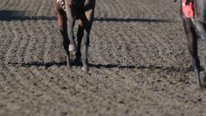 Horse race. Shot with 500mm lens. Shallow depth of field.