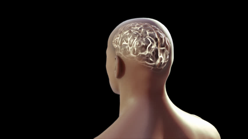 Human Brain Anatomy Video Lektonfo