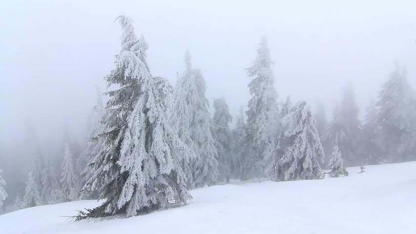 Winter in mountains. Ukraine, Carpathians, Dragobrat. HD | Shutterstock HD Video #3040078