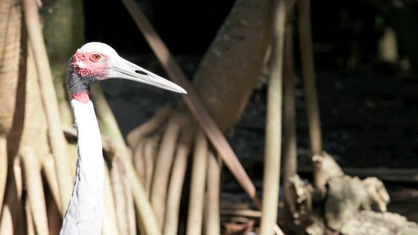 Stork - HD stock footage clip