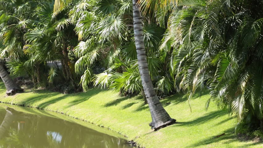 Tropical resort river palms and walkway | Shutterstock HD Video #3077779