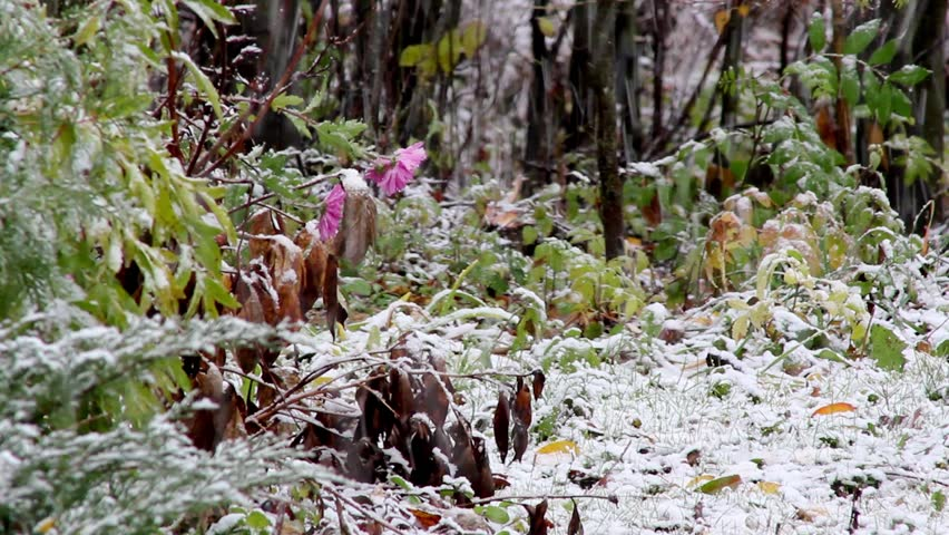 first snow,first breath of winter,snowfall,snowing, - HD stock footage clip