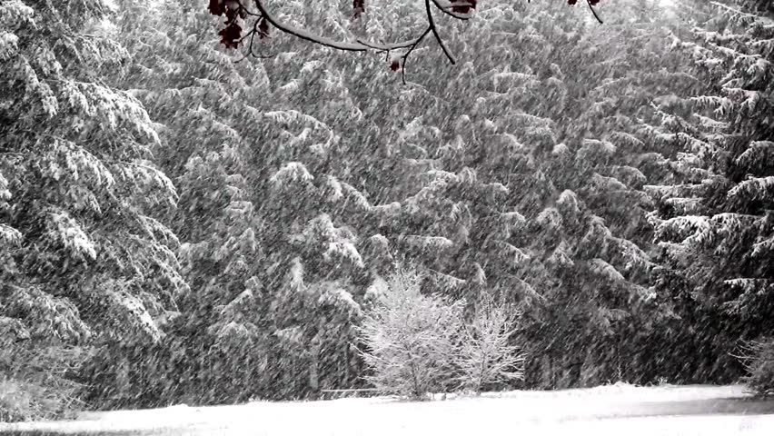 Snowfall in the forest park. Winter landscape in snow-covered park. Heavy snowfall.