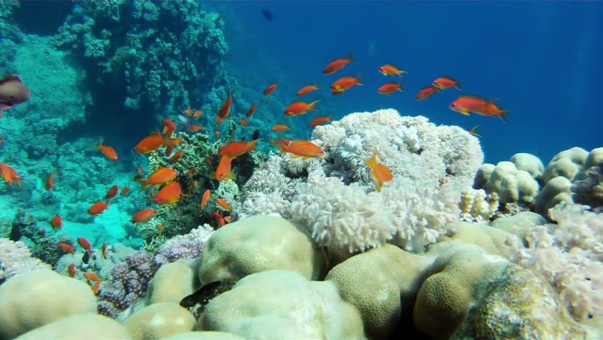 Coral and fish in the Red Sea.Egypt - HD stock video clip