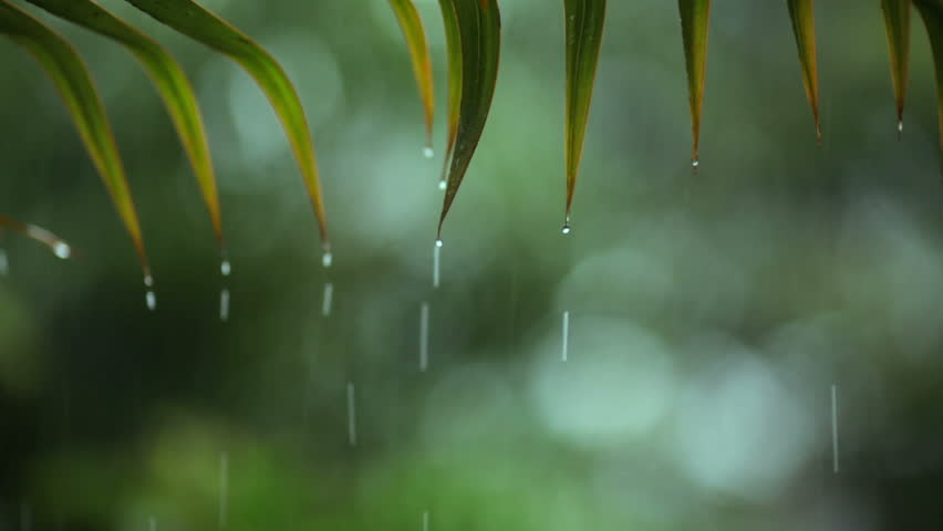 Tropical Rainfall. shallow focus on leafs with sound #3250696