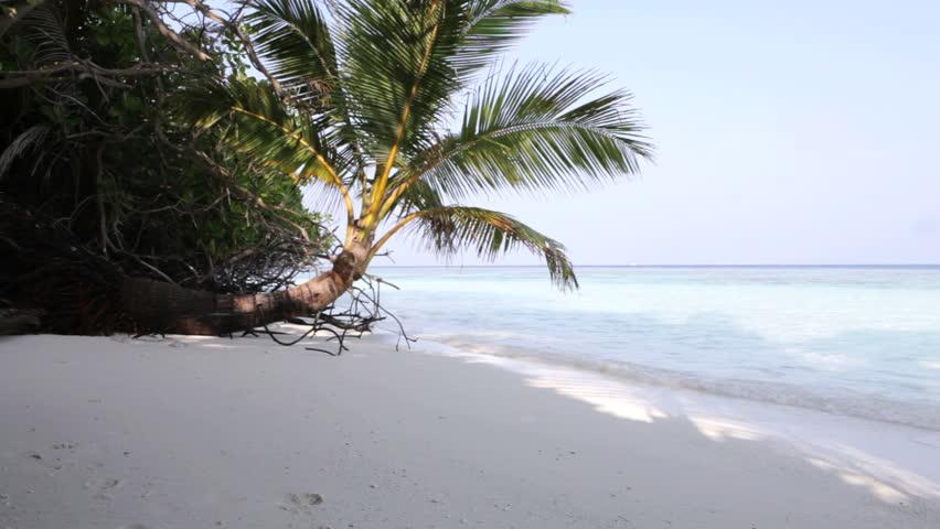 Maldives - tropical beach with palm, HD - HD stock video clip