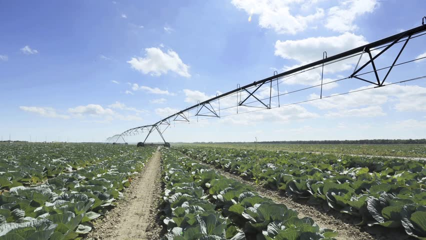 Time-lapse of a cabbage farm and pivoting irrigation