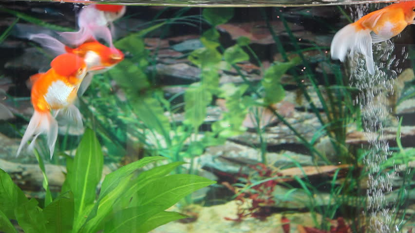 Very Beautiful Aquarium With Fishes And Corals Stock