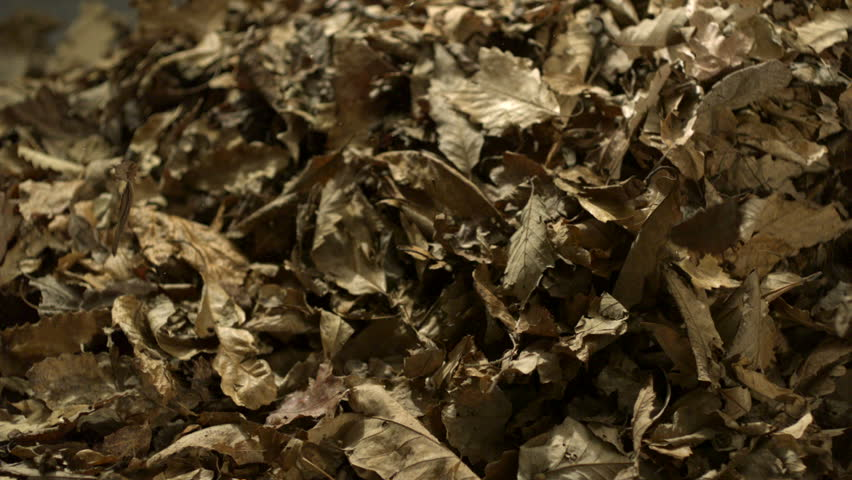 Dried leaves falling on black background shooting with high speed camera, phantom flex.