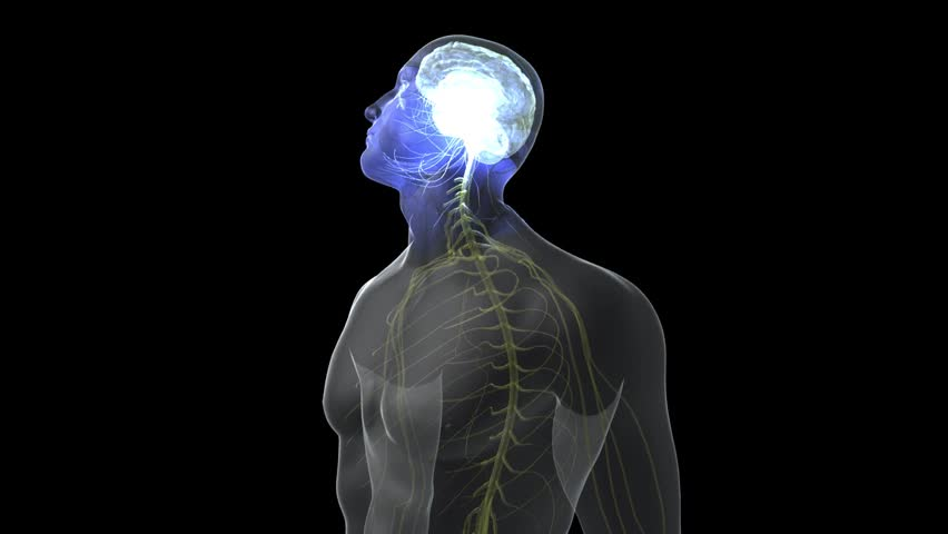 Zoom in to transparent male head nerves and brain distressed non verbally saying no shaking head side to side