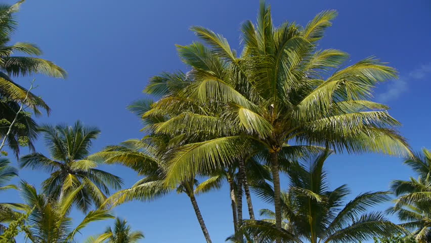 Palms on a tropical beach with a sound of an ocean - HD stock footage clip