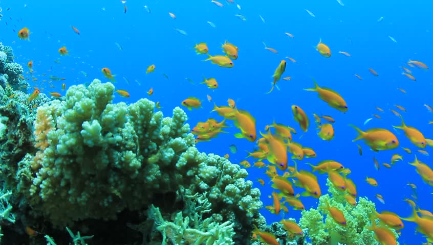 exotic fishes corals hd - photo #7