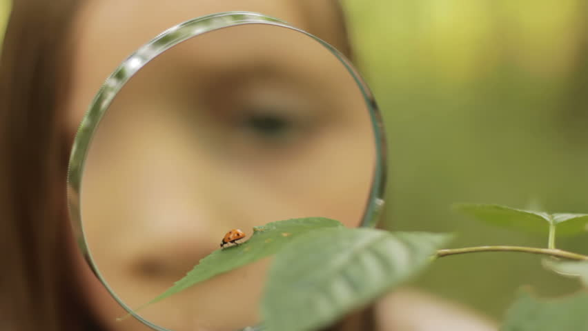 Child studies ladybird - a little girl studies a ladybird in nature with a magnifying glass - HD stock footage clip