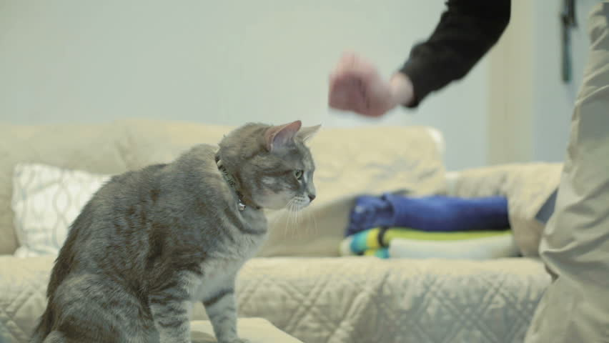 Cat doing tricks and giving guy a high five