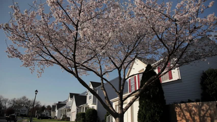 Suburban Neighborhood - HD stock video clip