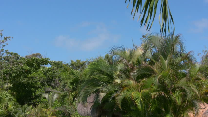 Palm trees 3 - HD stock video clip