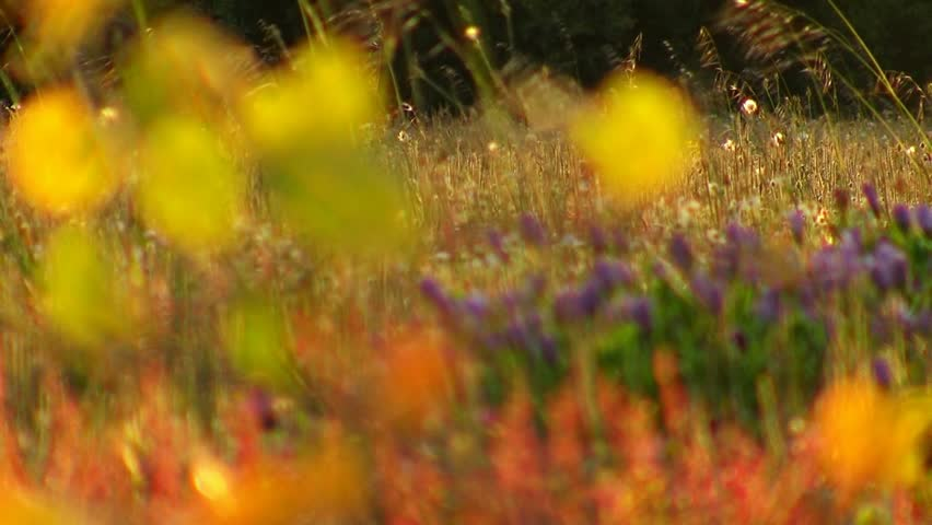 Spring meadow in back light - HD stock footage clip