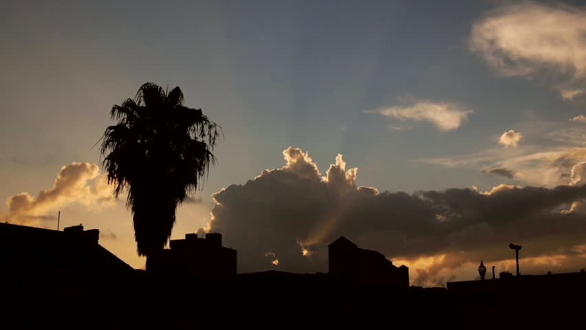 New Orleans, Louisiana -  June, 2011 - Medium shot of a palm tree silhouetted against the sky at dawn.