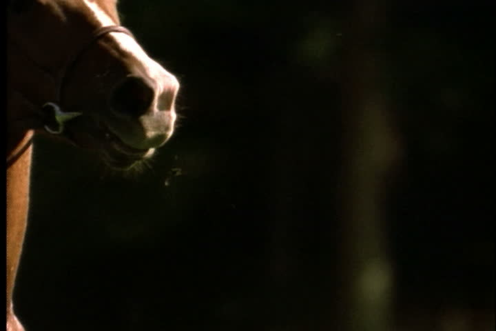 Head of horse bobbing up and down as it gallops in slow motion. - SD stock footage clip