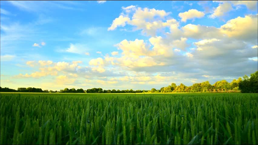 Time Lapse cornfield at cologne