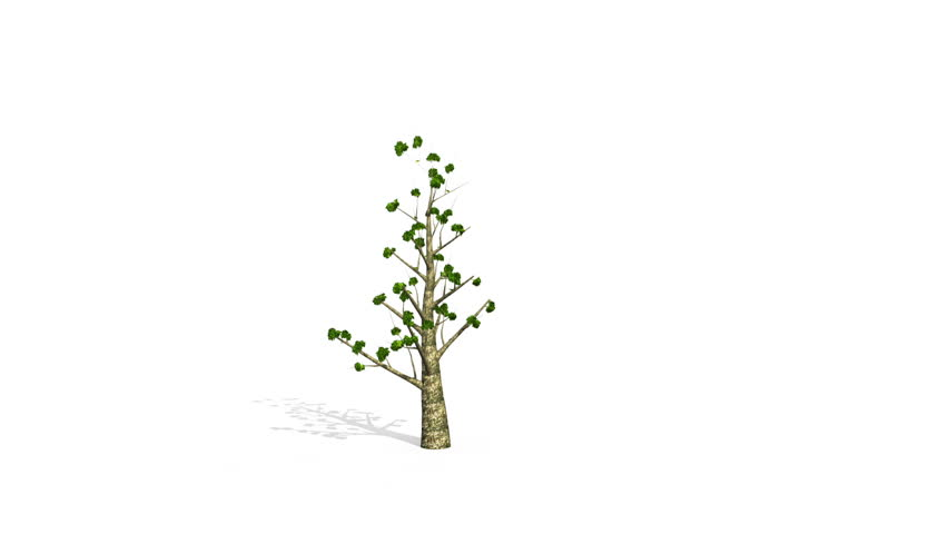 Tree grow version 2