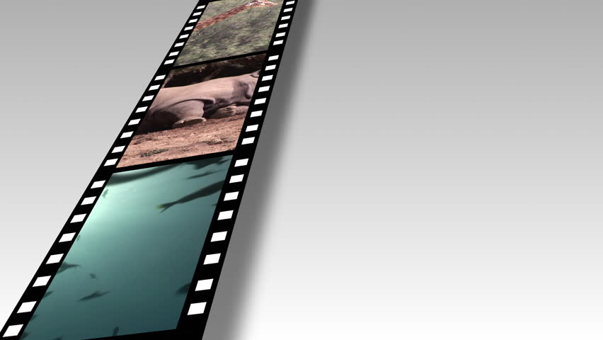 Collage of Wildlife footage 2 - HD stock video clip