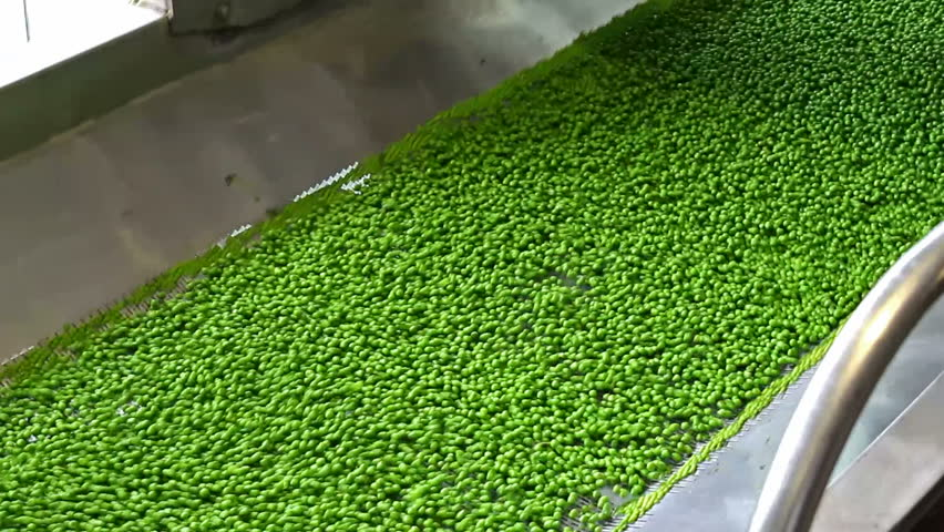 peas in processing ; fresh peas in the production and processing on the factory a conveyor belt,video clip - HD stock footage clip