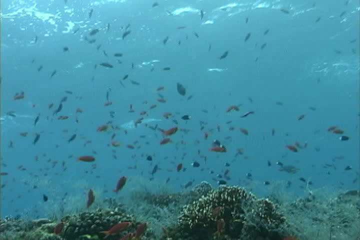 Many fish blue water fiji stock footage video 4315571 for How many fish are in the ocean