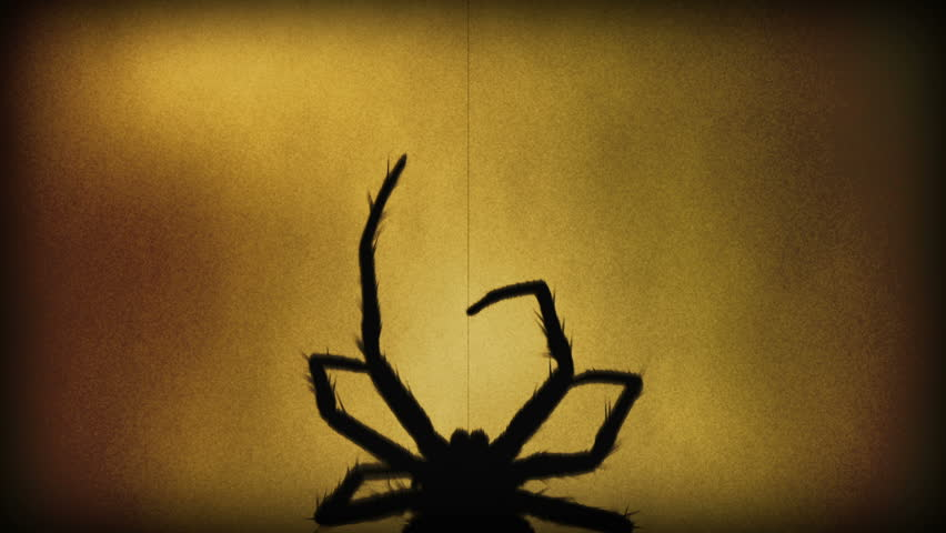 One big venomous spider climbing up a thread of its web. Spider silhouette at sepia background.