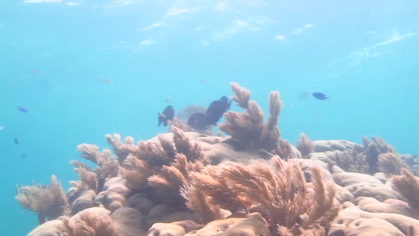 Shallow coral reef, caribbean sea - HD stock footage clip