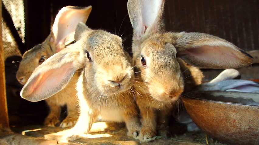 bunny rabbit sniffing around - photo #48