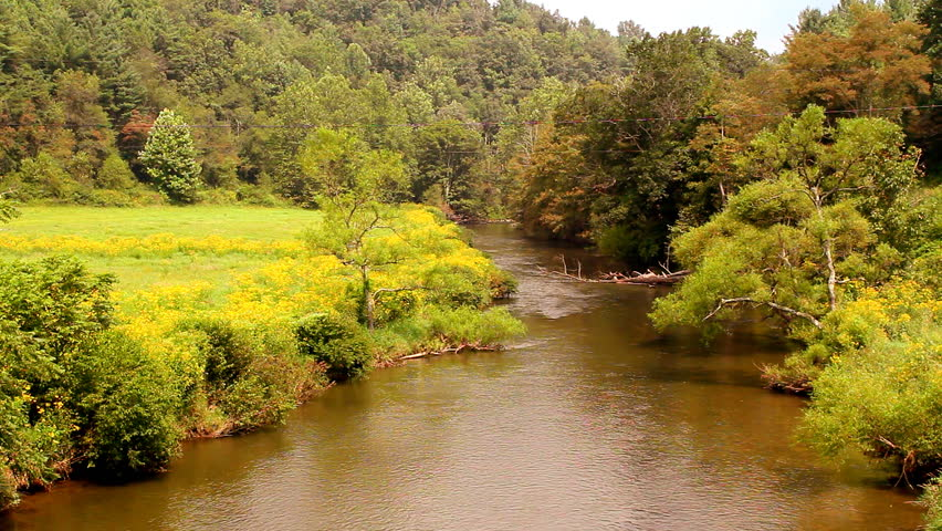 Free Flowers River Mountain: Yellow Flowers Grow Wild Along This Mountain River Bed
