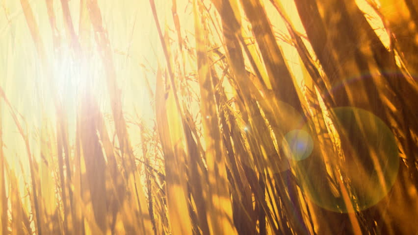Fields fertile. Sequence.